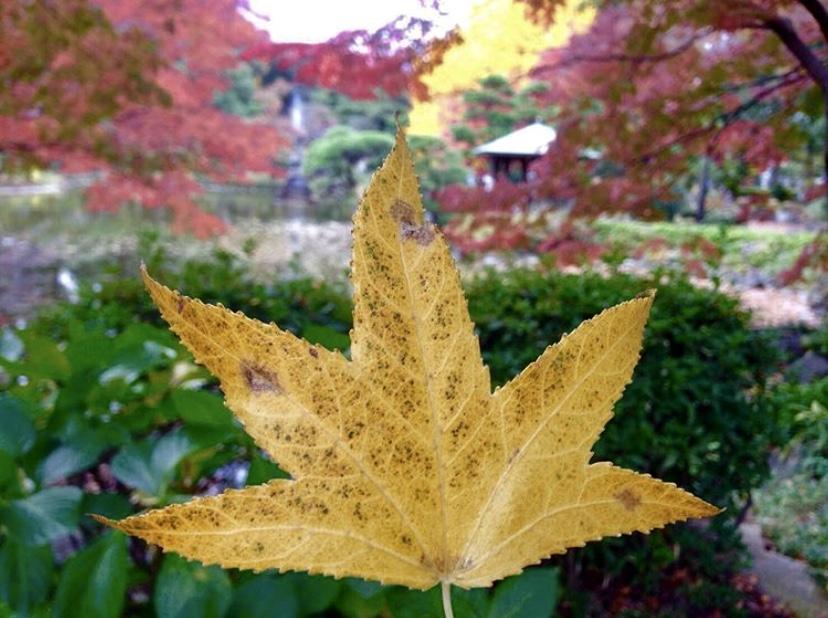 Tempat Favorit Menikmati Musim Gugur di sekitar Tokyo – Tokyo's Autumn Foliage ViewingSpots