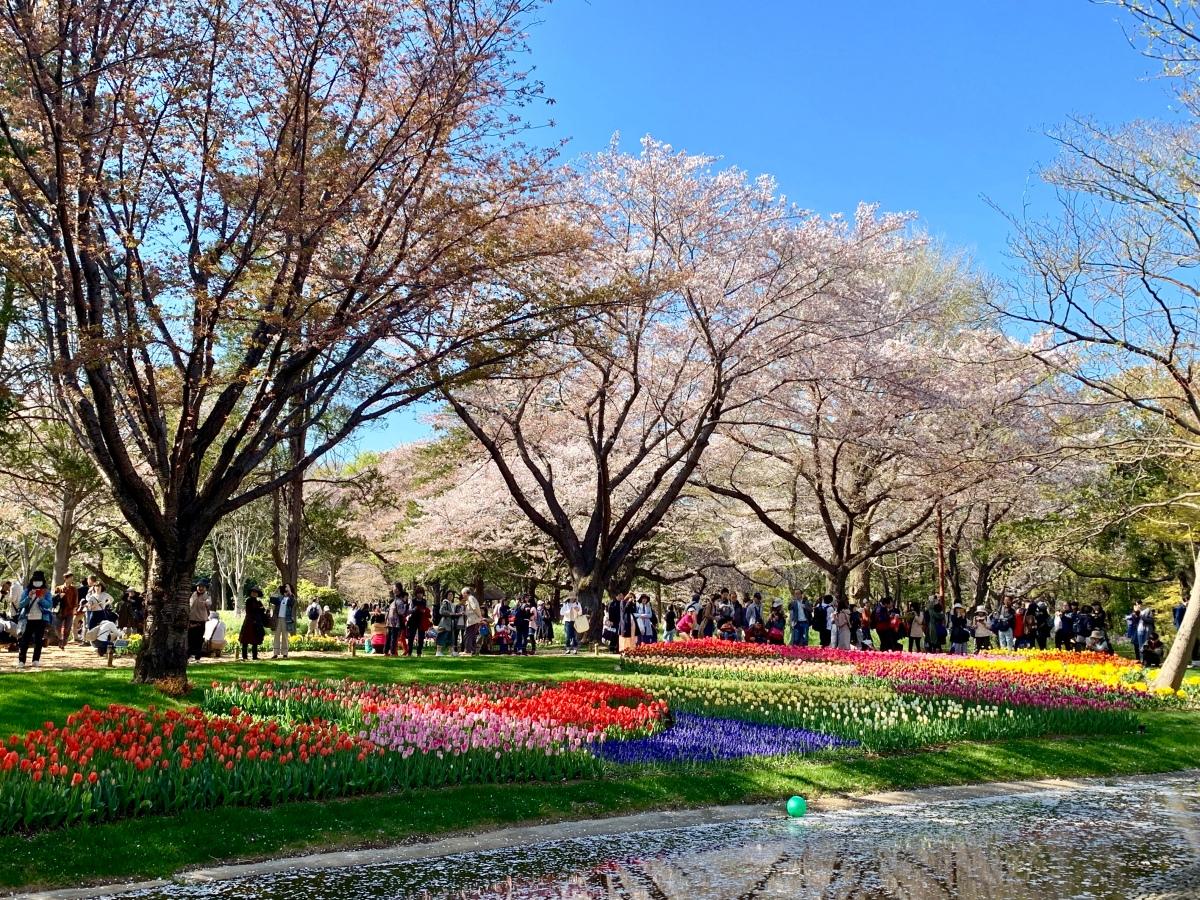 Showa Kinen Koen : Taman Terluas dan Terindah di AreaTokyo